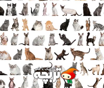 تصاویر با کیفیت گربه