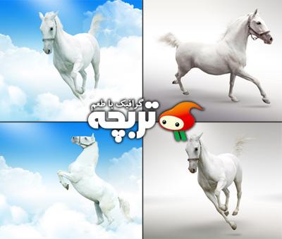 دانلود تصاویر با کیفیت اسب سفید Horse ShutterStock