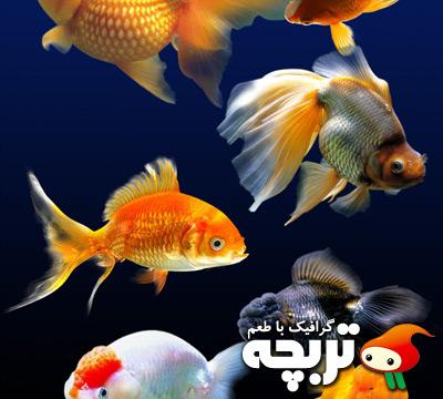 طرح لايه باز ماهی قرمز