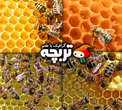 عکس با کیفیت زنبود عسل ، موم عسل