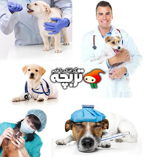دانلود تصاویر با کیفیت دامپزشک Veterinarian ShutterStock
