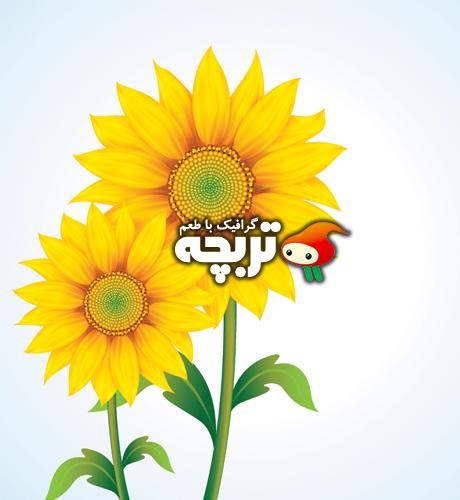 دانلود وکتور گل آفتابکردان SunFlowers Vector