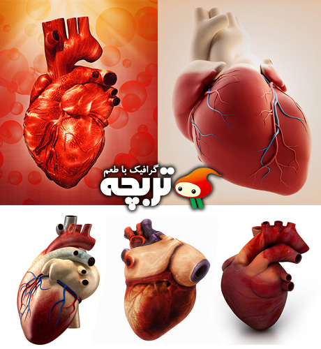 دانلود تصاویر با کیفیت قلب انسان Human Heart Fotolia