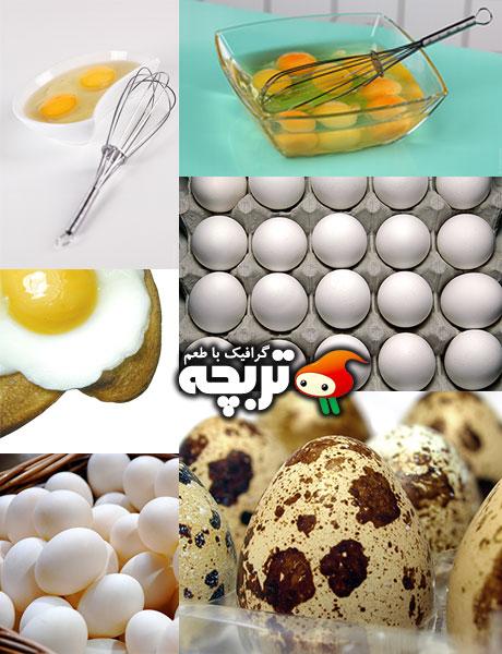دانلود تصاویر با کیفیت تخم مرغ Eggs Stock Photos