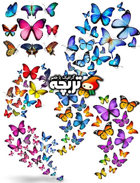 دانلود تصاویر با کیفیت پروانه های رنگی Butterflies Stock Photos
