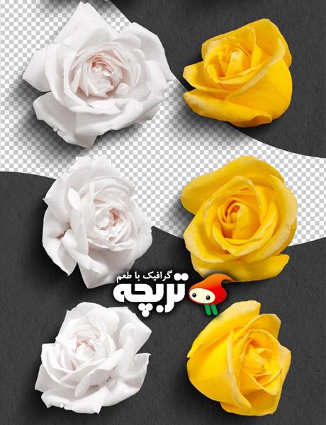 دانلود طرح لایه باز گل های زرد و سفید رز Yellow And White Roses PSD