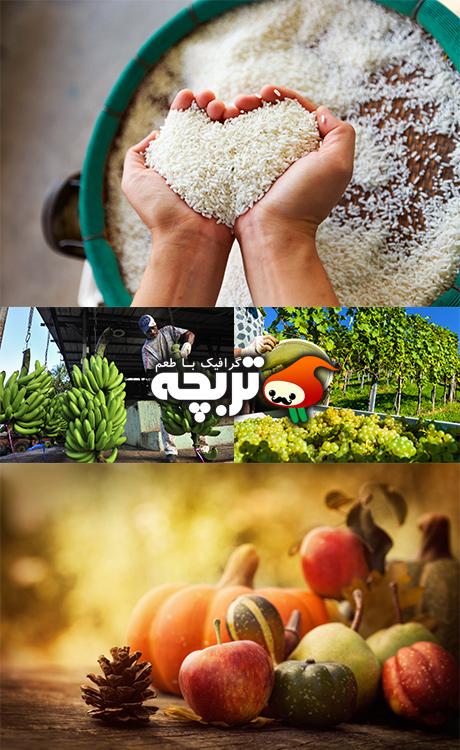 تصاویر با کیفیت کشاورزی Collection Farming Stock