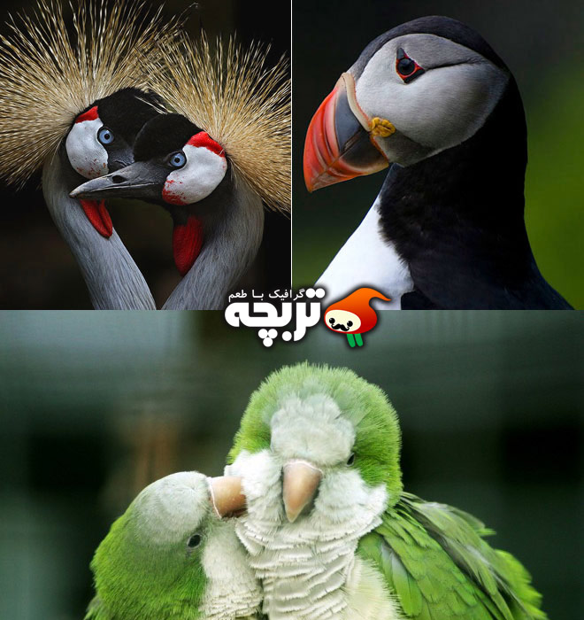 نمونه تصاویر عکاسی از پرندگان در طبیعت