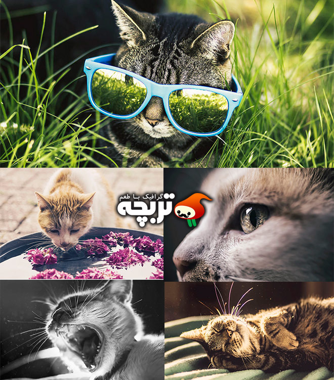 ۱۶ عکس با مزه و خلاقانه از گربه توسط Felicity Berkleef