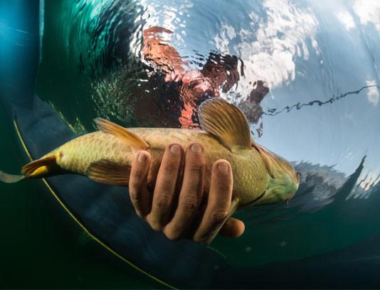 عکس با کیفیت ماهیگیری فلای