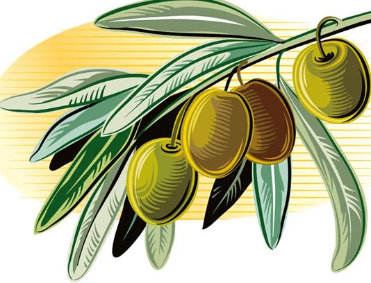 وکتور زیتون سبز با برگ به صورت نقاشی