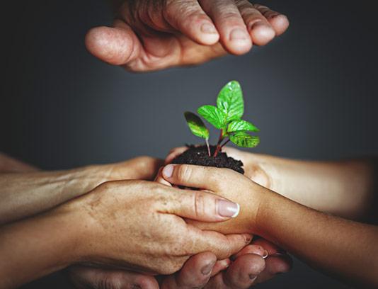عکس با کیفیت نهال گیاه تازه روئیده