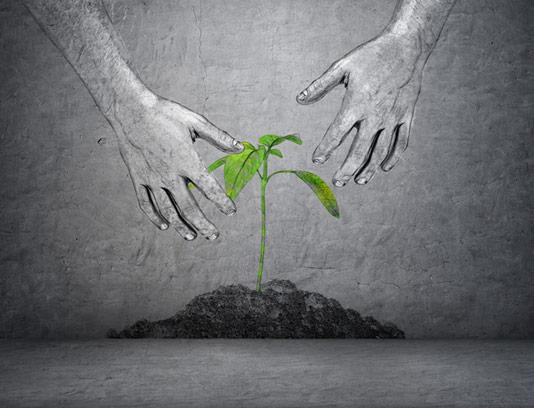 عکس با کیفیت مفهومی نهال سبز امید