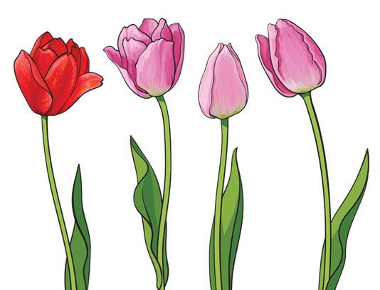وکتور گل های لاله بدون پس زمینه