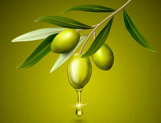 وکتور با کیفیت زیتون سبز با برگ و روغن زیتون