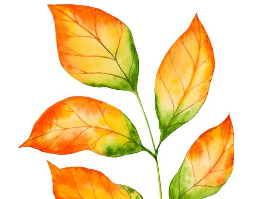وکتور طرح برگ های زرد پاییزی با فرمت AI و PNG