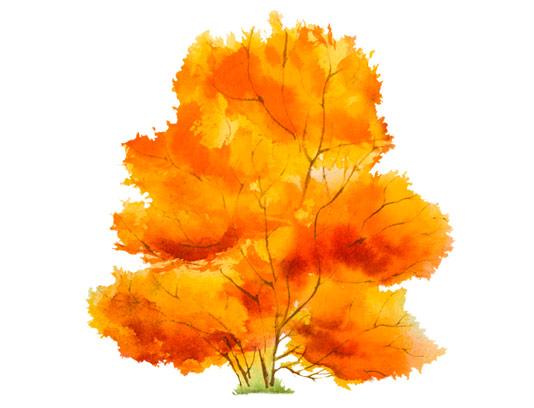 وکتور درخت پاییزی با فرمت AI و فرمت PNG