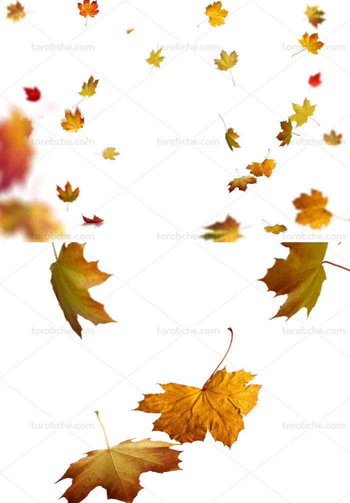 عکس با کیفیت ریزش برگ های پاییزی دوربری شده