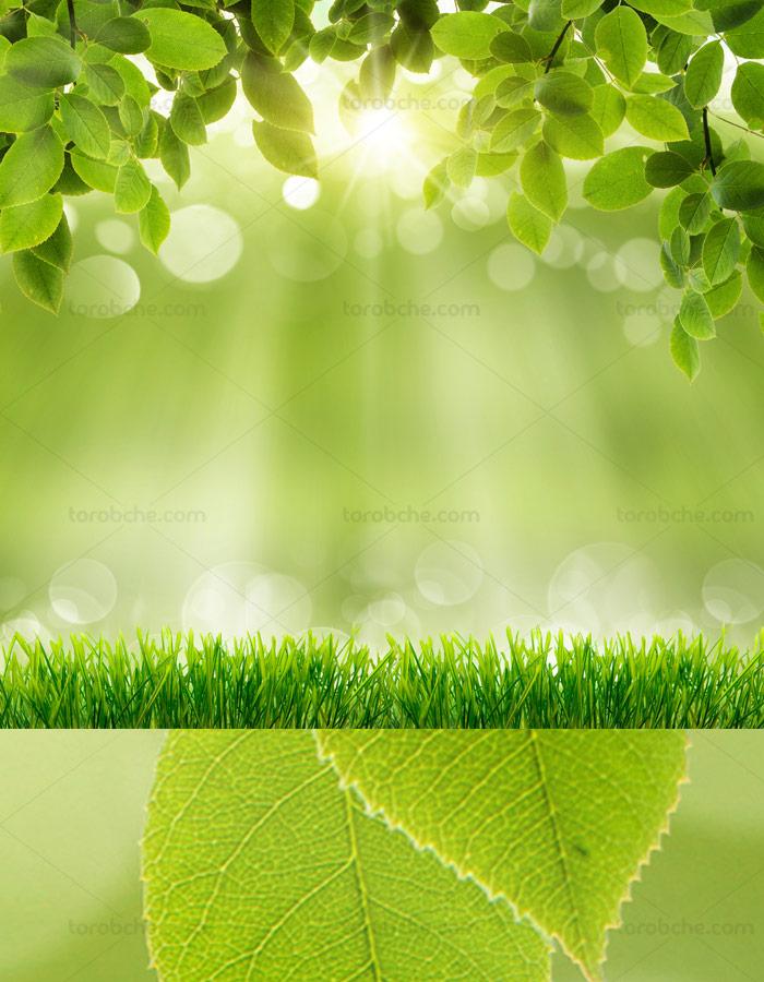 پس زمینه با کیفیت فضای سبز با تابش نور خوشید