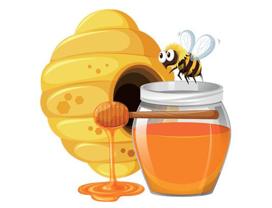 وکتور زنبور عسل، کندو و عسل