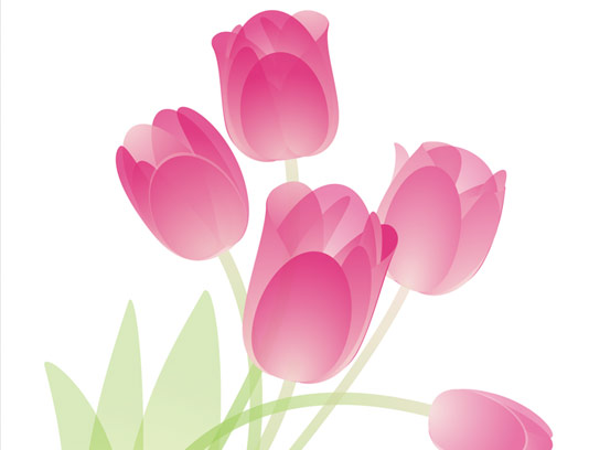 وکتور طرح گل های لاله صورتی رنگ