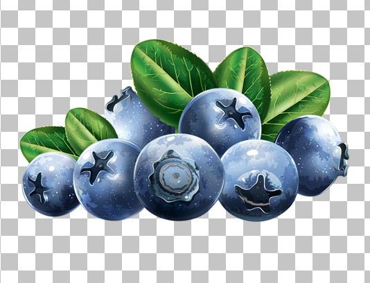 عکس با کیفیت میوه بلوبری دوربری شده PNG