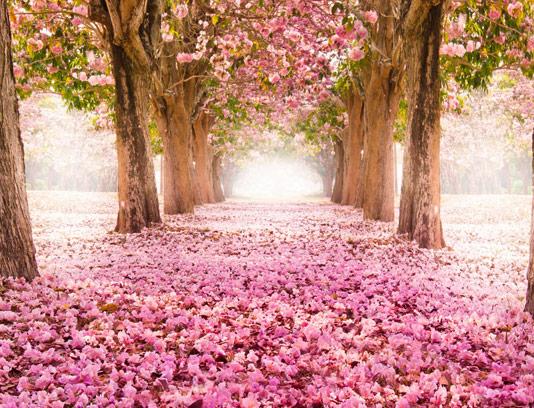 عکس با کیفیت منظره طبیعت آتلیه عروس شماره ۰۱