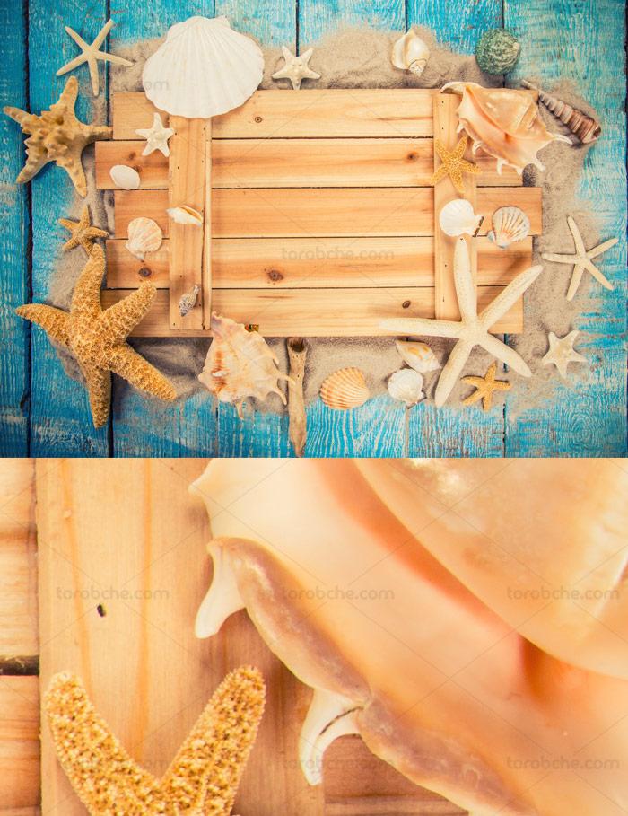 بگراند و پس زمینه ساحلی با صدف های دریایی
