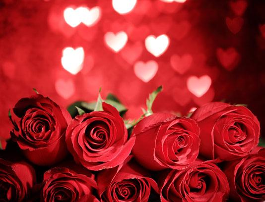 پس زمینه عاشقانه گل های رز قرمز و بوکه های قلب
