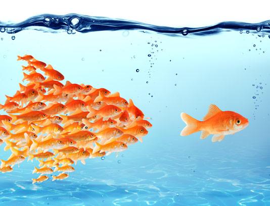 عکس با کیفیت مفهومی کار گروهی ماهی های قرمز