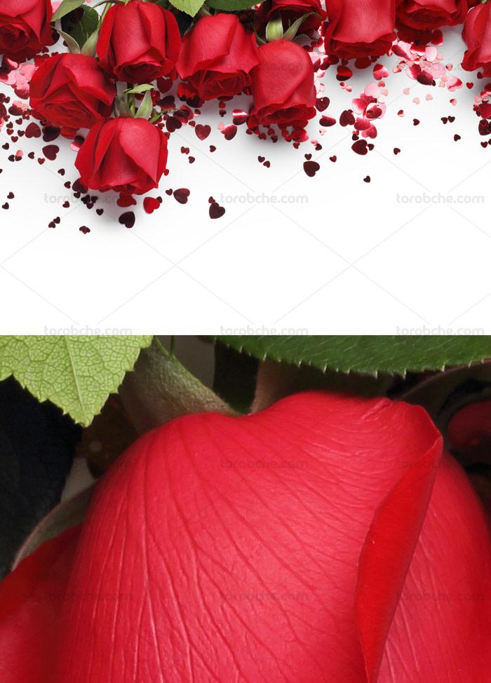 عکس با کیفیت بکگراند و زمینه با گل های رز قرمز