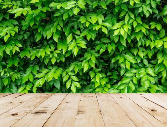 بکگراند چوبی با زمینه برگ های سبز تازه