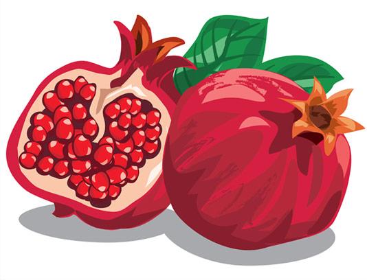 وکتور طرح نقاشی میوه انار با کیفیت عالی