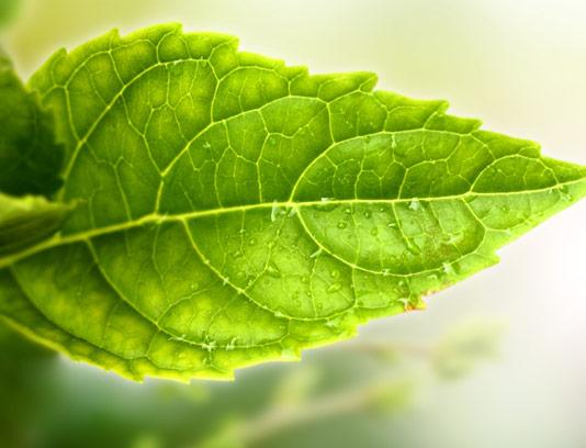 عکس با کیفیت برگ سبز رنگ با قطرات آب