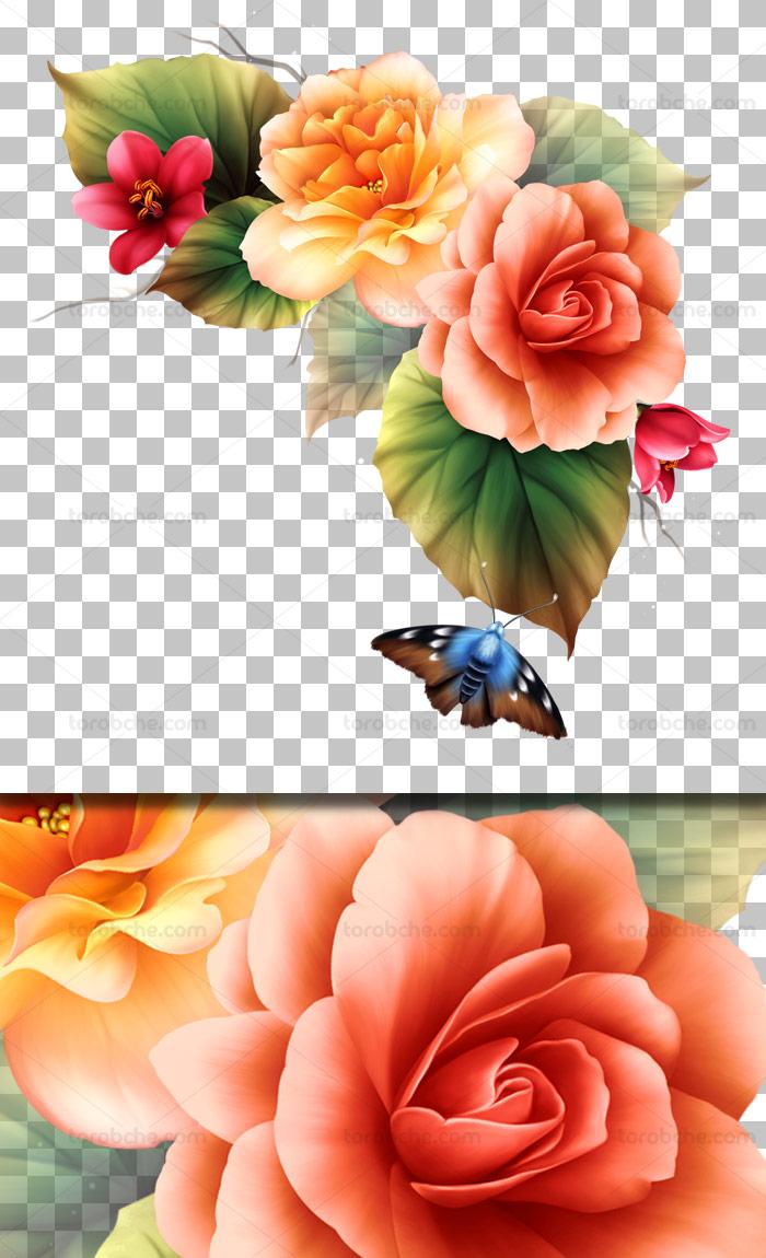 عکس دوربری شده گل های زیبا و پروانه