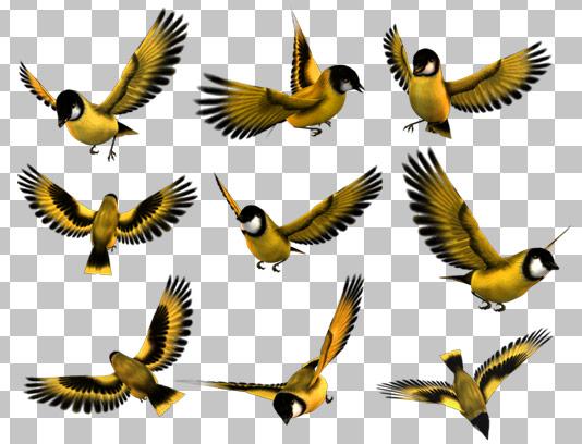 عکس با کیفیت دوربری شده پرنده و گنجشک در حالت های پرواز مختلف