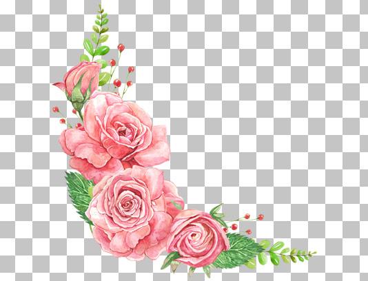 عکس گل های رز صورتی دوربری شده حاشیه ای