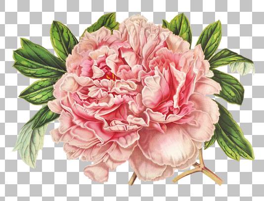 عکس با کیفیت دوربری شده گل صورتی PNG