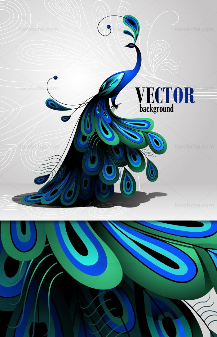 وکتور طرح پرنده ی طاووس آبی رنگ بسیار زیبا