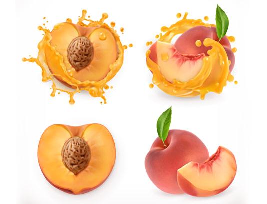 وکتور میوه هلو با کیفیت عالی و واقع گرایانه