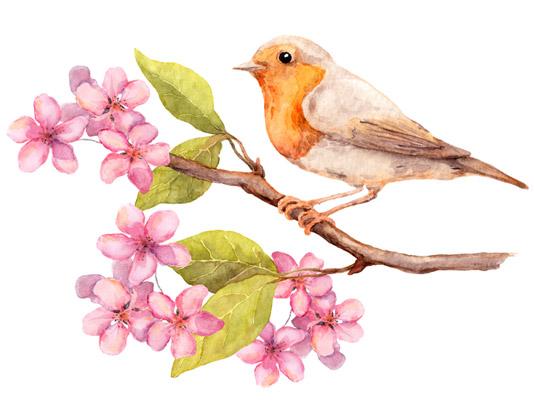 عکس با کیفیت پرنده روی شاخه و شکوفه های بهاری