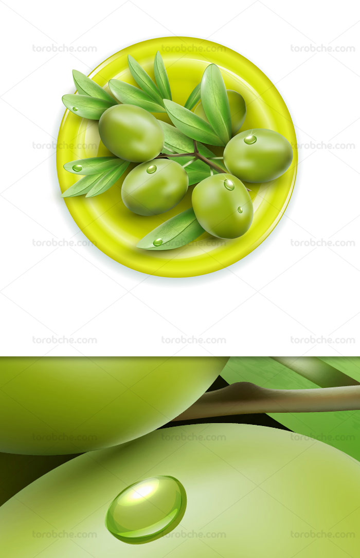 وکتور زیتون سبز و تازه با برگ درخت زیتون