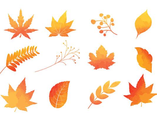 وکتور انواع برگ های پاییزی