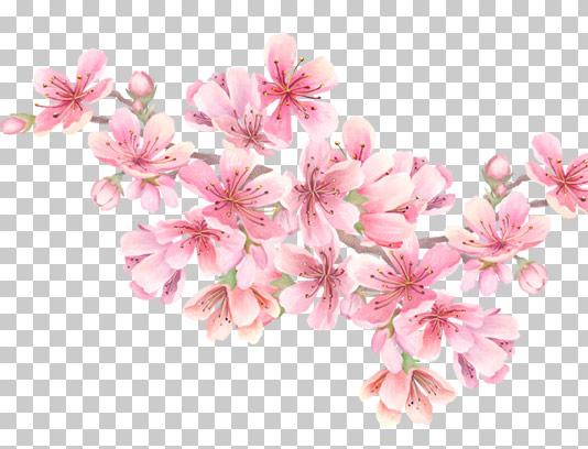 عکس شکوفه های بهاری دوربری شده با کیفیت