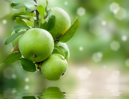 عکس سیب سبز و انعکاسش در آب