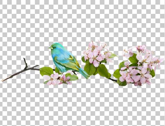 عکس دوربری شده پرنده و شکوفه درختان
