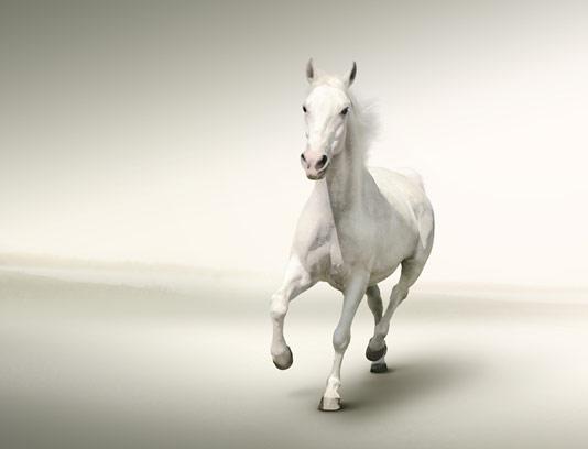 عکس با کیفیت اسب سفید
