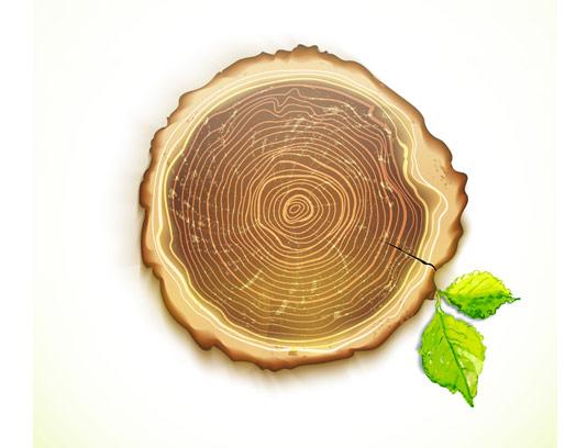 وکتور تنه درخت قطع شده