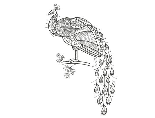 وکتور رنگ آمیزی بزرگسالان طاووس