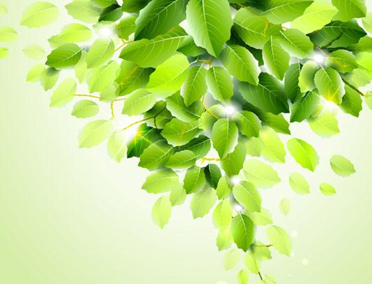 وکتور بکگراند برگ های سبز درخت